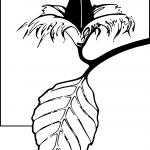 logo_CDPGS_PNG_transp